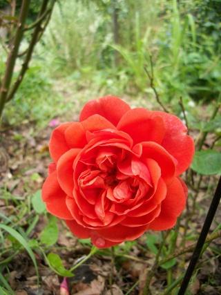 rosier summer song Photo126