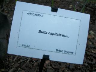 Conservatoire botanique brestois Photo480
