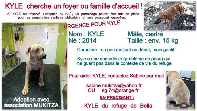 KYLE, M-X, né 2014, 15 kg (BELLA) - Pris en charge Les Amis des Bêtes du Soissonnais Fiche_16