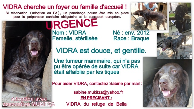 VIDRA, F-Type Braque, Née 2012, tumeurs (BELLA) Prise en charge Asso ENFIN LE BONHEUR Fiche_42