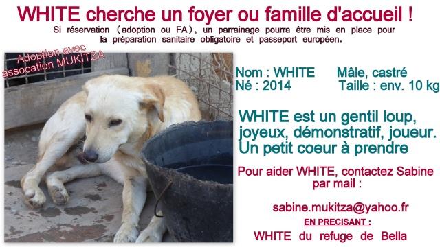 bella - WHITE -  2014 - 10 kg - Un gentil loup - (BELLA)/ URGENT : PEUT ARRIVER ! Fiche_57
