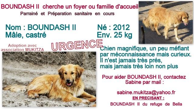 BOUNDASH II, né 2012, 25 kg (BELLA) Pris en charge Association Animals Rescue (Belgique) Fiche_73