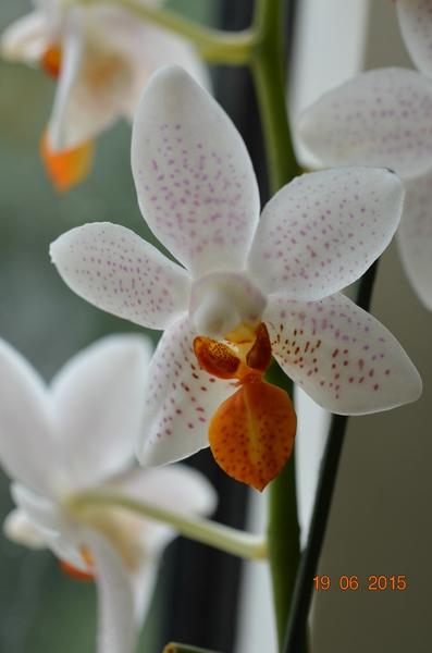 Orchideen-Neuzugang - Seite 6 Comp_d10