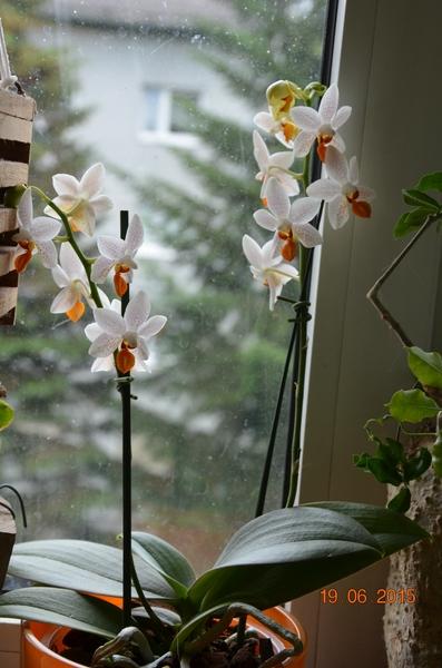 Orchideen-Neuzugang - Seite 6 Comp_d11