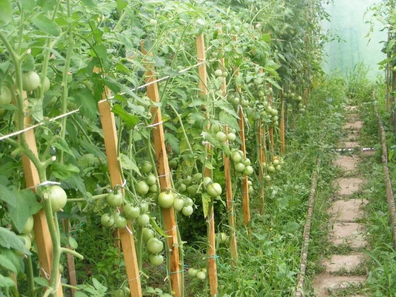 mon jardin Dscf2910