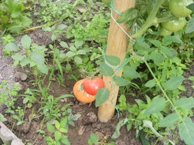mon jardin Dscf2911