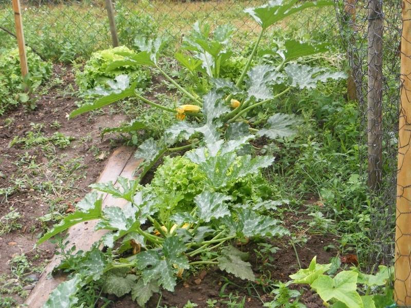 mon jardin Dscf2912