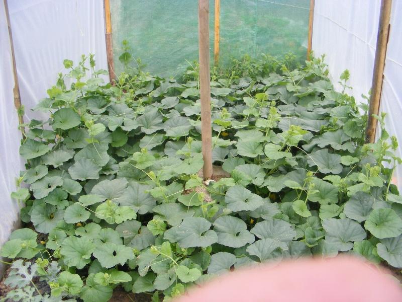 mon jardin Dscf2913