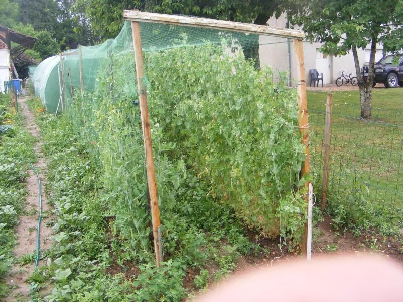 mon jardin Dscf2914