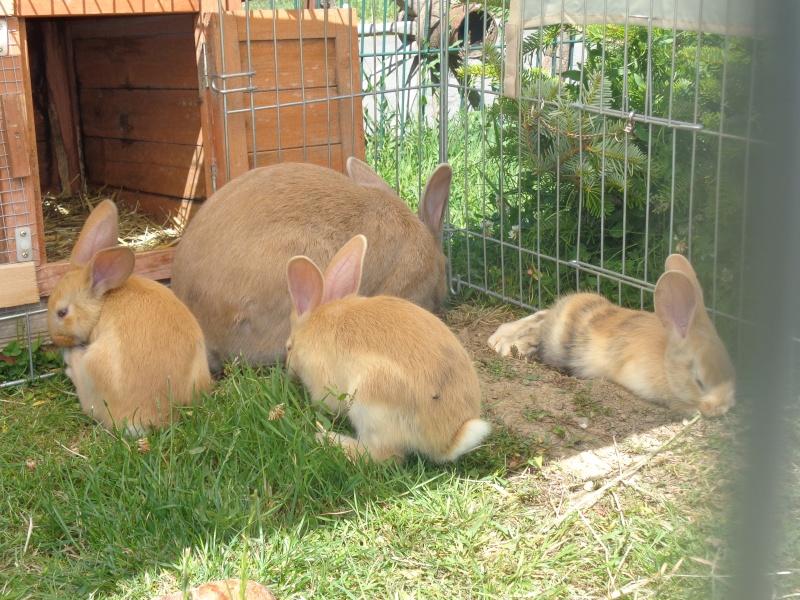 Mes ptites poussines et ptits lapins Dsc01413