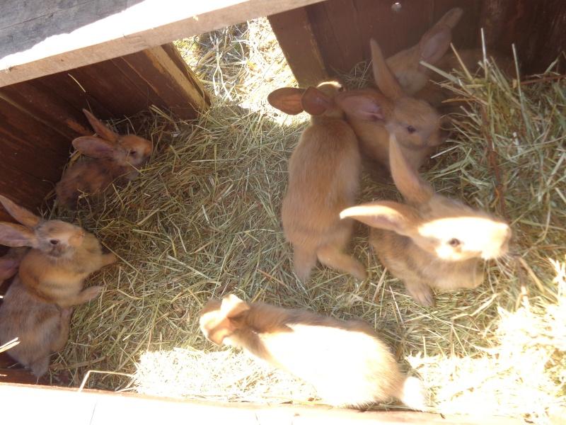 Mes ptites poussines et ptits lapins Dsc01414