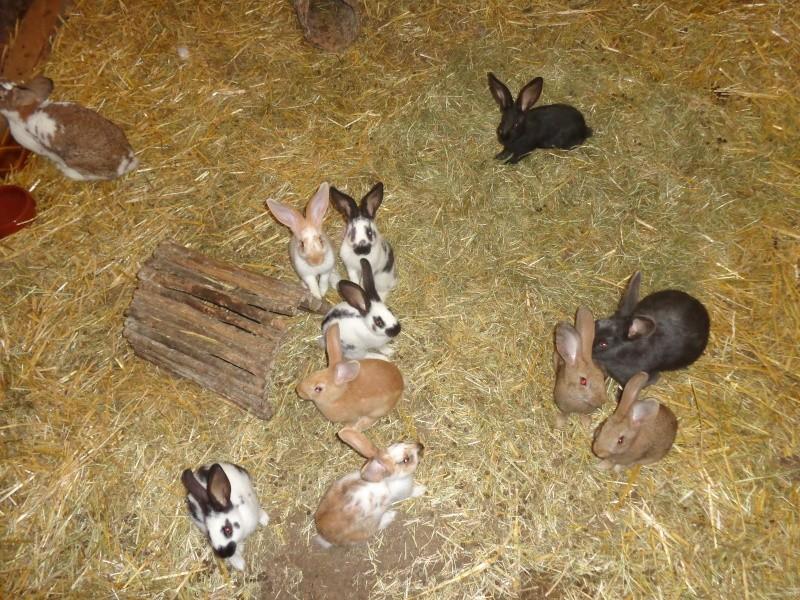 Mes ptites poussines et ptits lapins Dsc01415