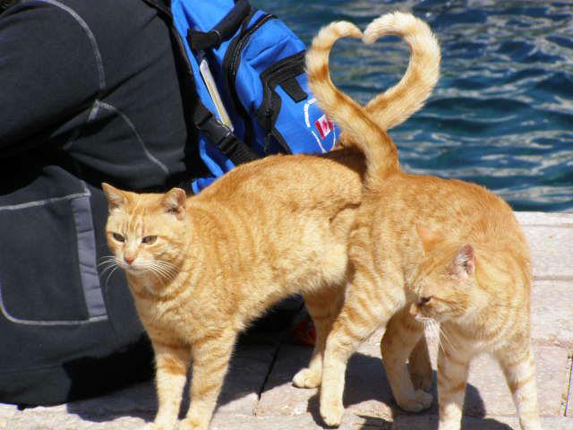 HUMOUR - Photos prises pil poil... Cats-h10