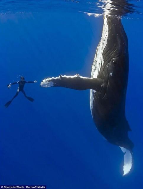 HUMOUR - Photos prises pil poil... Diver-10