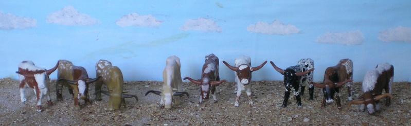 Meine Longhorn-Herde wächst - Seite 2 065h2_10