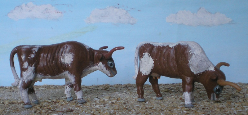 Meine Longhorn-Herde wächst - Seite 2 065h3b10