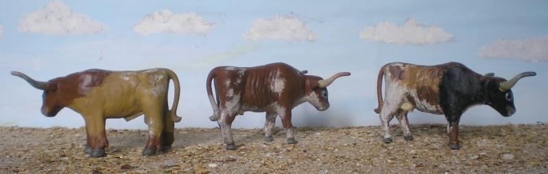 Meine Longhorn-Herde wächst - Seite 2 065i2b10
