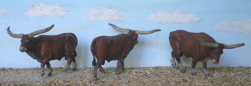 Meine Longhorn-Herde wächst - Seite 2 167f1_10