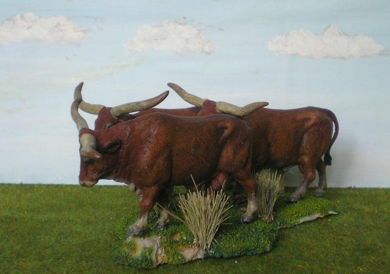 Meine Longhorn-Herde wächst - Seite 2 167g4b11