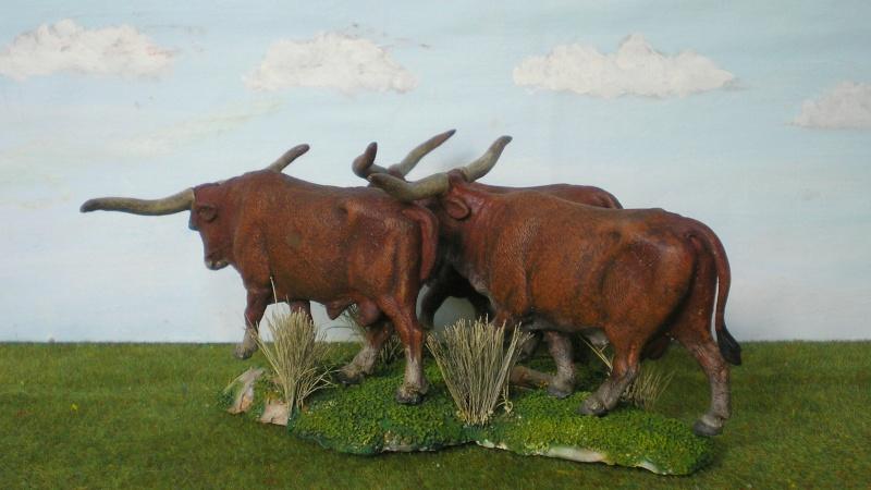 Meine Longhorn-Herde wächst - Seite 2 167g4b12