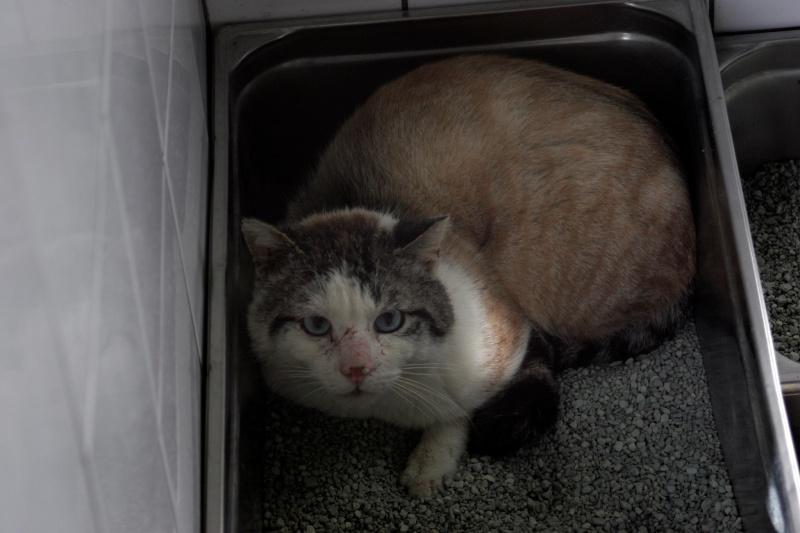 Photos des chats sauvés, avant/après - Page 8 11029710