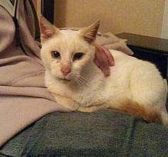 Photos des chats sauvés, avant/après - Page 8 20141010