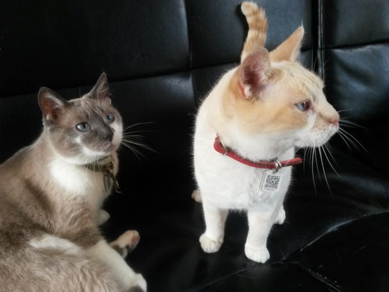 Photos des chats sauvés, avant/après - Page 8 Vanill10