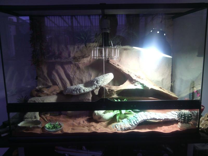 pogona refuse de manger et rester en zone chaude Img_2016