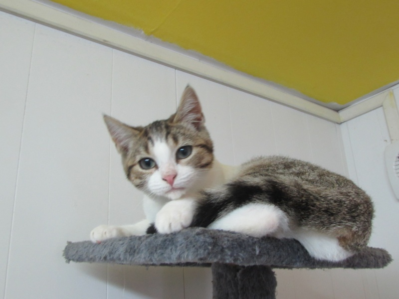 FICELLE (chatte) 01822