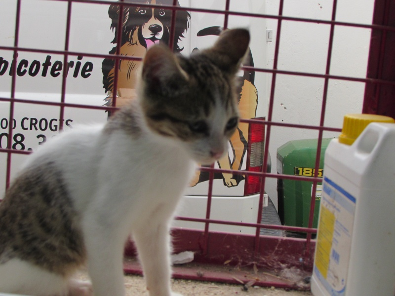 FICELLE (chatte) 0361610