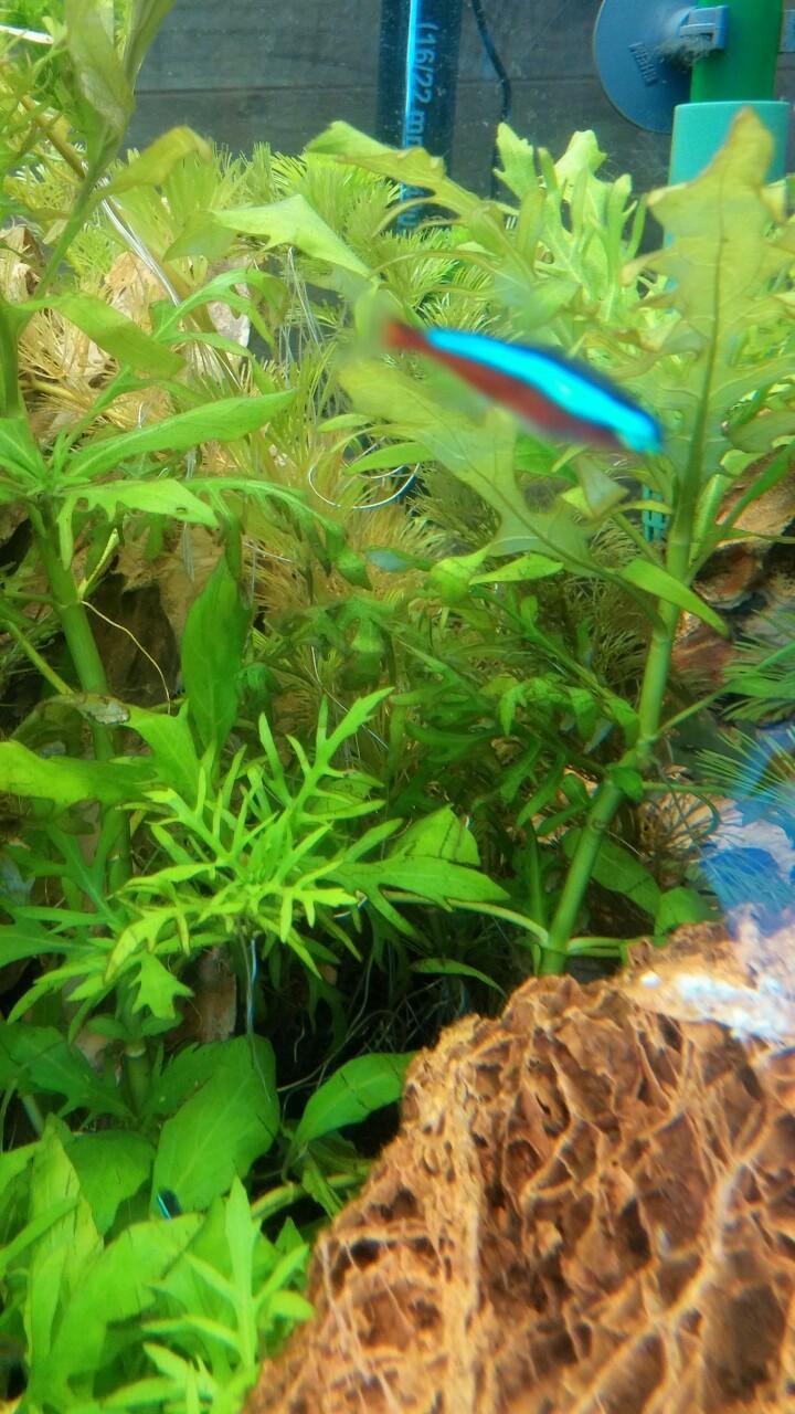 avis croissance de mes plantes Img_2010