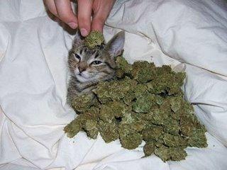 CAT INVASION !!!!!!!!!!!!!!!!!!!!!!! - Page 2 Cat-ca10