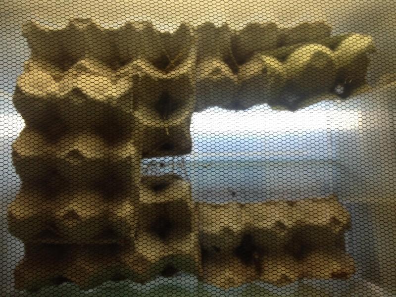 Nouvelle installation pour mes criquets et mes ténébrion meunier 11792110