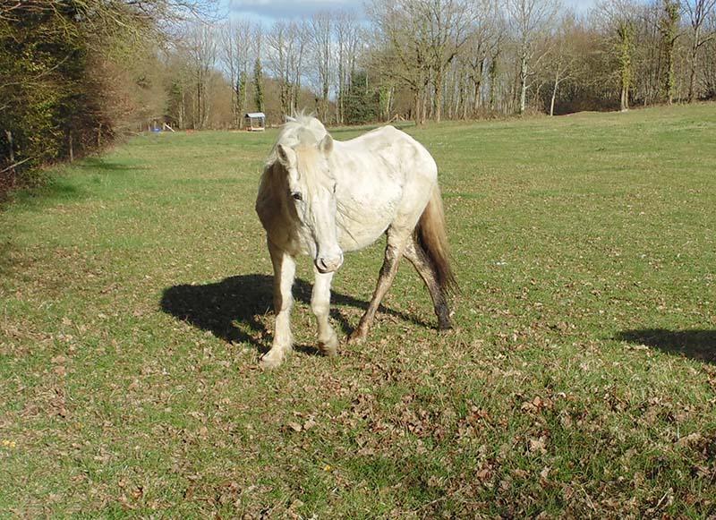 DONA - PRE née en 1987 - accueillie en septembre 2012 chez Pech-Petit - Page 4 Dona_m11