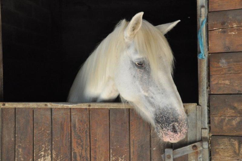 IMPREVU - OI (poney D) né en 1996 - adopté en juillet 2016 par Patricia Imprev10