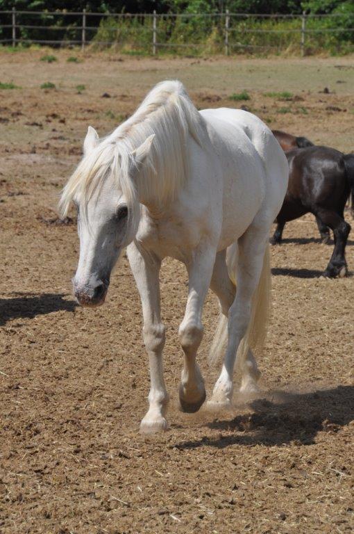 IMPREVU - OI (poney D) né en 1996 - adopté en juillet 2016 par Patricia Imprev15