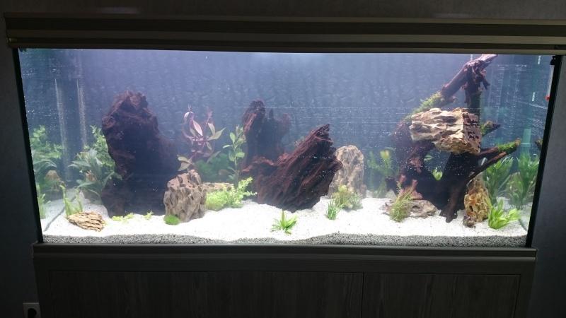 algues diverses et fertilisation besoin de conseils Dsc_0110