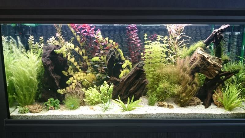 algues diverses et fertilisation besoin de conseils Dsc_0111