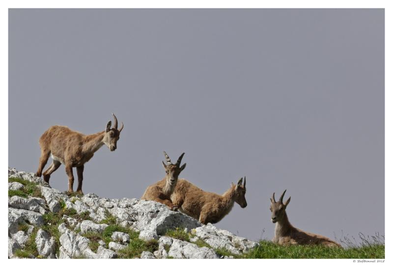 Vercors' Safari : entre soleil et brume 1e2a8214