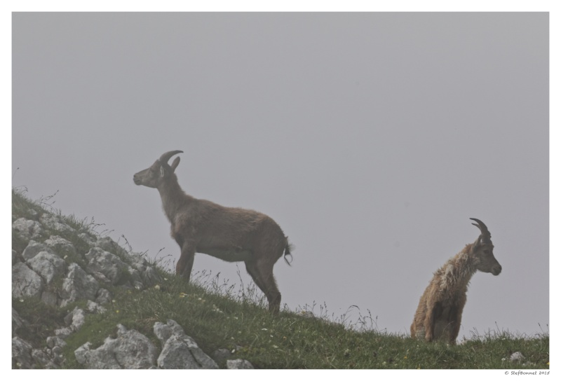 Vercors' Safari : entre soleil et brume 1e2a8310