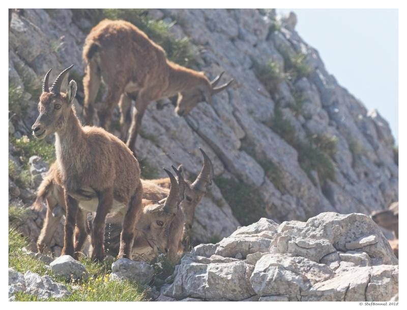 Vercors' Safari : entre soleil et brume 1e2a8411