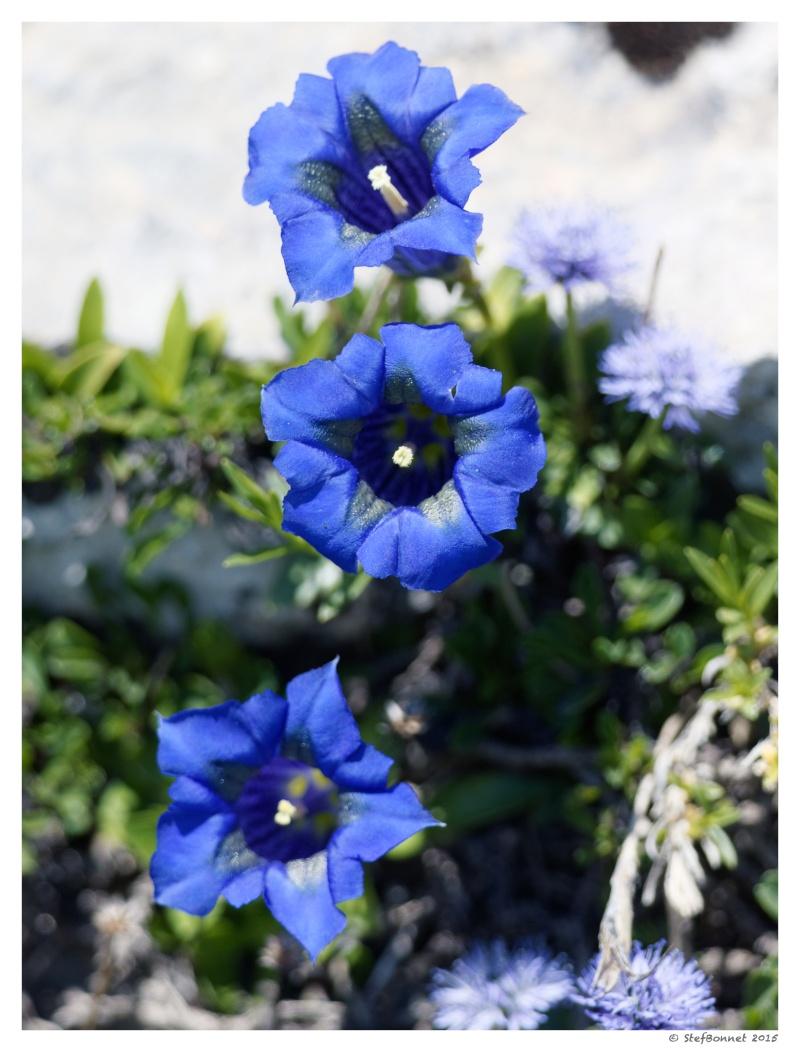 Vercors' Safari : fleurs et papillon 1e2a8516