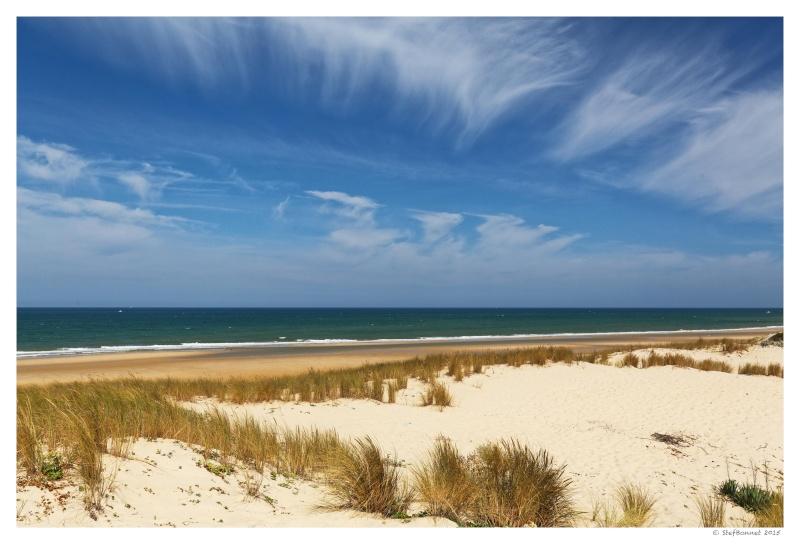 Cap Ferret : balade dans les dunes, coté océan Fg5c8910