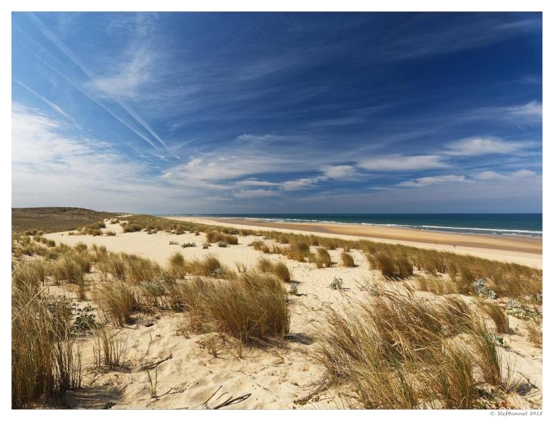 Cap Ferret : balade dans les dunes, coté océan Fg5c8911
