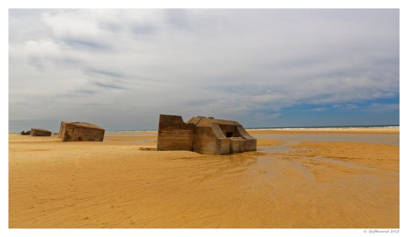 Cap Ferret : balade dans les dunes, coté océan Fg5c9011