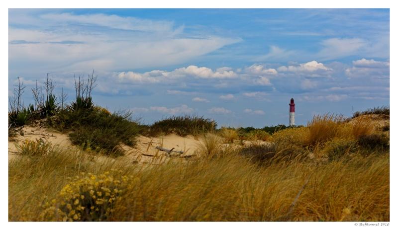 Cap Ferret : balade dans les dunes, coté océan Fg5c9013