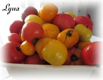 Ketchup aux tomates et pommes Ketchu11