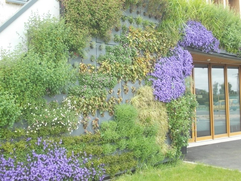 mur vegetal Dscn5114
