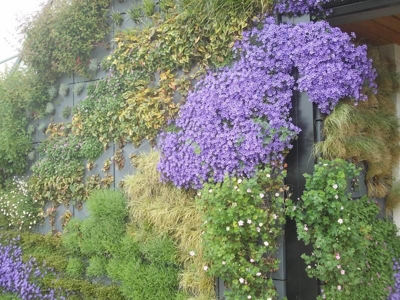 mur vegetal Dscn5115