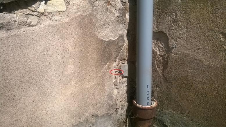 Nid de guêpes dans mur en pierres 14342915